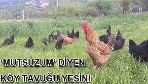 'MUTSUZUM' DİYEN KÖY TAVUĞU YESİN!