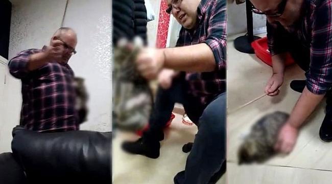 Kediye işkence yapan adam akıl hastanesine sevk edildi