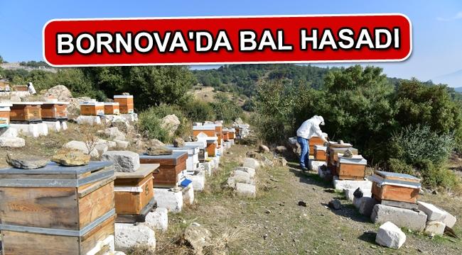 Bornova'da bal hasadı