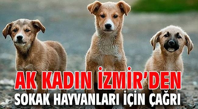 AK Kadın İzmir'den çağrı! Haydi sen de bir kap su, bir kap mama bırak