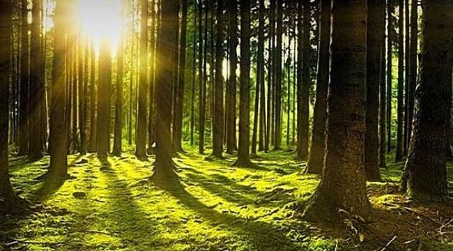 CHP'den ormanlar için Meclis Araştırması önergesi!