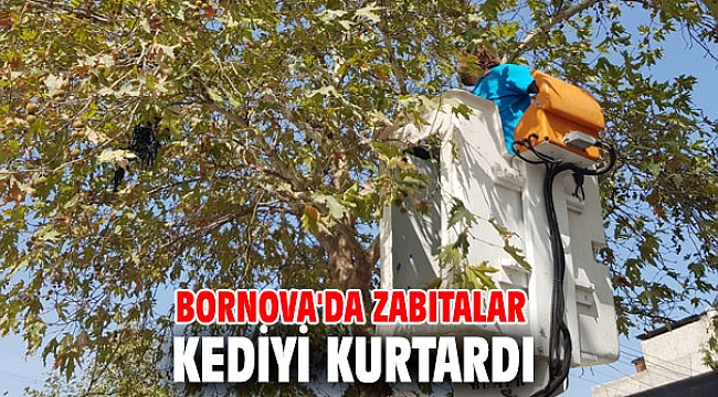Bornova'da zabıtalar kediyi kurtardı