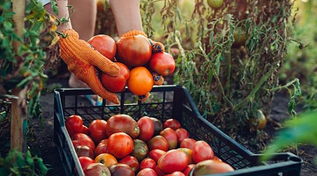 Taze meyve sebzede kayıp ve israf yüzde 50